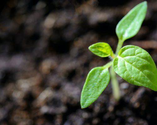 closeup-photo-of-sprout-1002703
