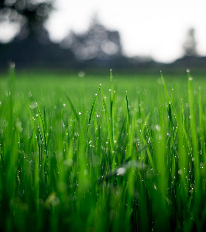 shallow-focus-photography-of-green-grasses-during-daytime-212324(1)